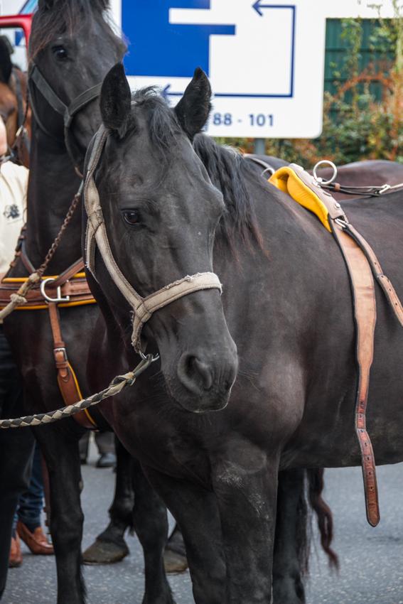 paardenparade-1