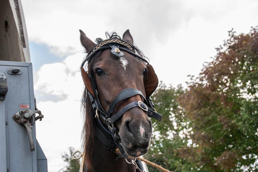 paardenparade-59