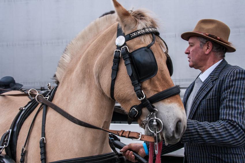 paardenparade-62