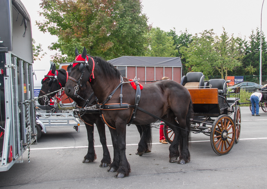 paardenparade-7