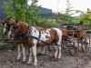 paardenparade-11