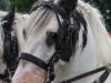 paardenparade-22