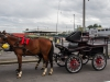 paardenparade-5