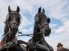 paardenparade-57