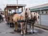 paardenparade-58