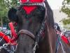 paardenparade-6