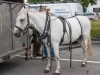 paardenparade-61
