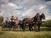 paardenparade-72