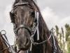 paardenparade-73